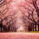 Primavera no Canadá